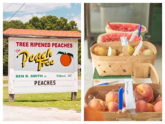 The Peach Tree_Filbert, SC